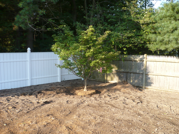 planting-tree-wide-hole