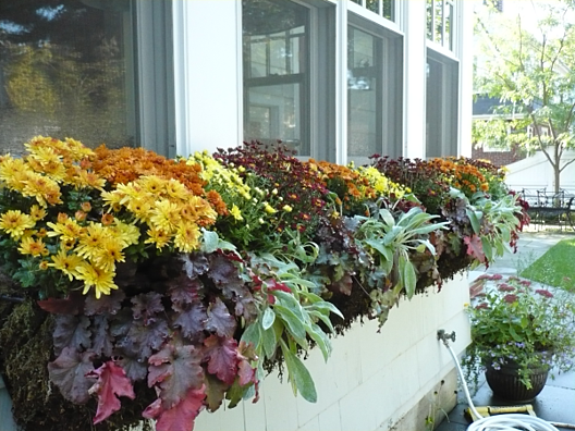 ANNUAL GARDENS - FALL INTEREST PLANTS FOR YOUR PLANTERS