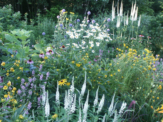 PERENNIALS - ABUNDANCE IN LAYERS