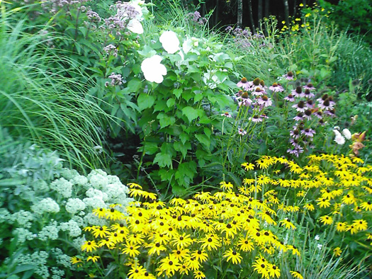PERENNIALS - FLOWER POWER IN THE GARDEN