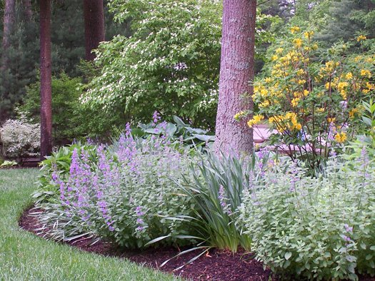 Perennial Landscaping Ideas