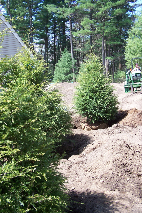 Landscape Field Videos: How to Plant a Tree