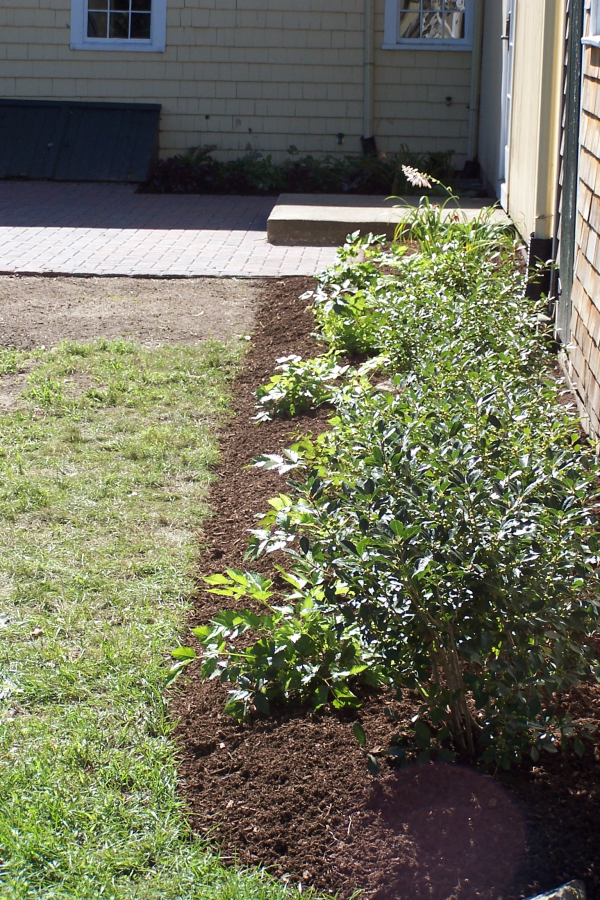 planting-beds-winterberry-mulch-patio