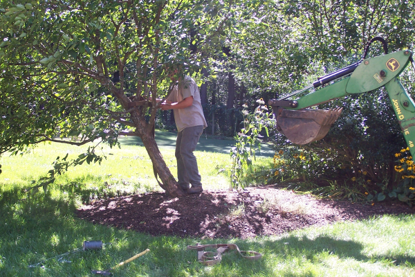 How to Straighten a Damaged Ornamental Tree