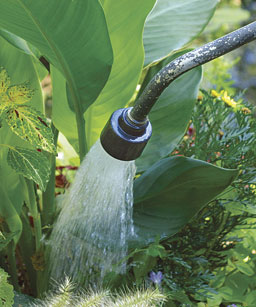 Watering-Wand-image-from-FineGardening.com
