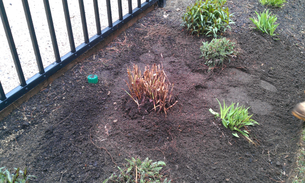 grass-division-planted