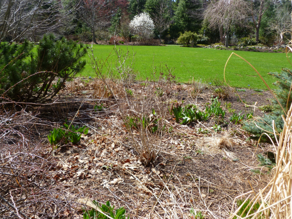 5 Must Do Landscape Tasks for the Spring Garden