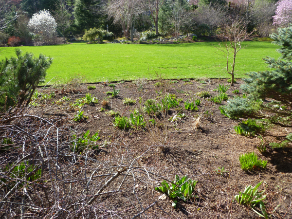 early-spring-garden-after-clean up