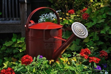 123RF-Free-Stock-Photos-red-watering-can-in-the-garden