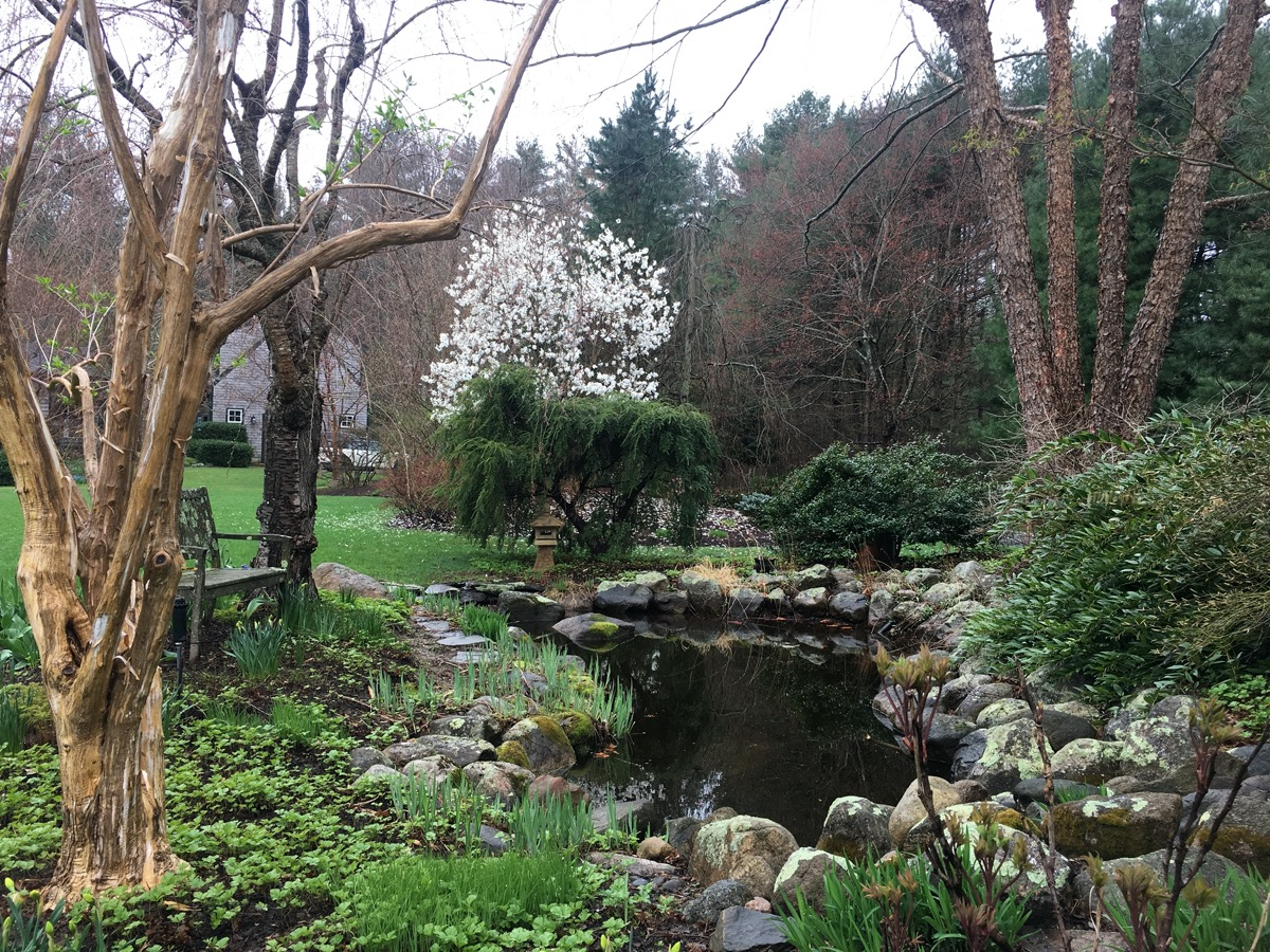 A tranquil garden to simply enjoy
