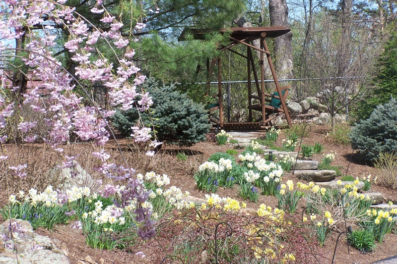 Back-slope-bulb-show-in-early-spring-before-perennials.jpg