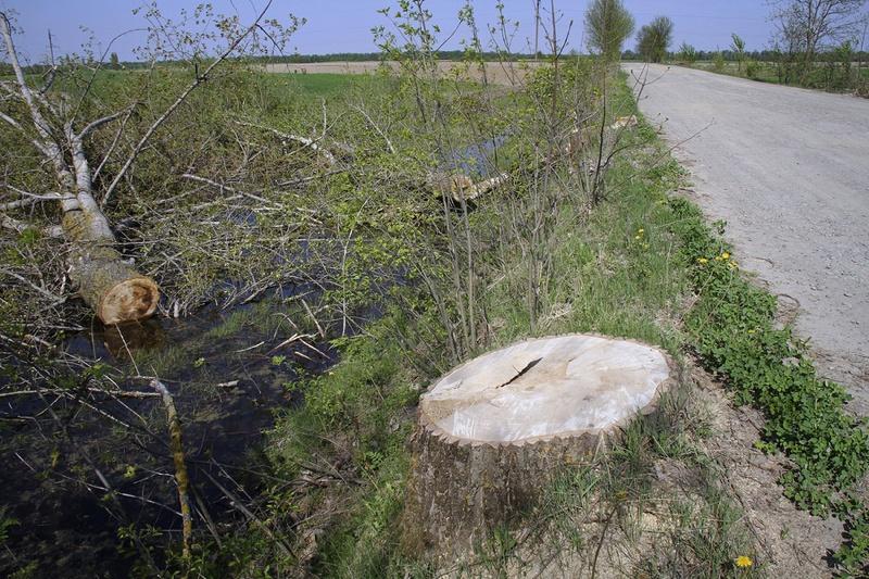 Felled-tree-along-wetland-marsh.jpg