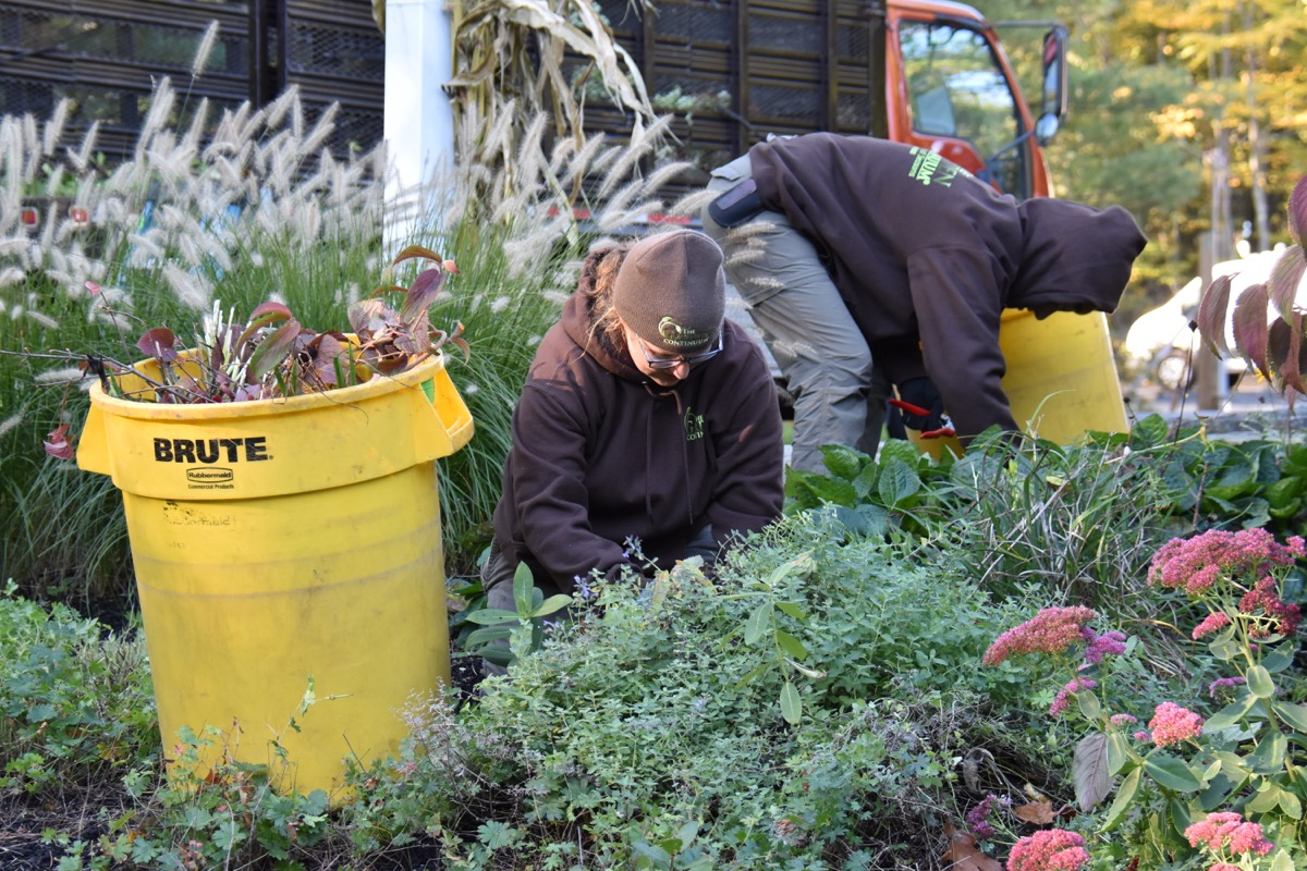 Focused care on perennial beds to keep them lush and beautiful