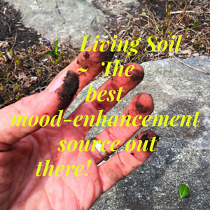Living-Soil-Enhances-Mood