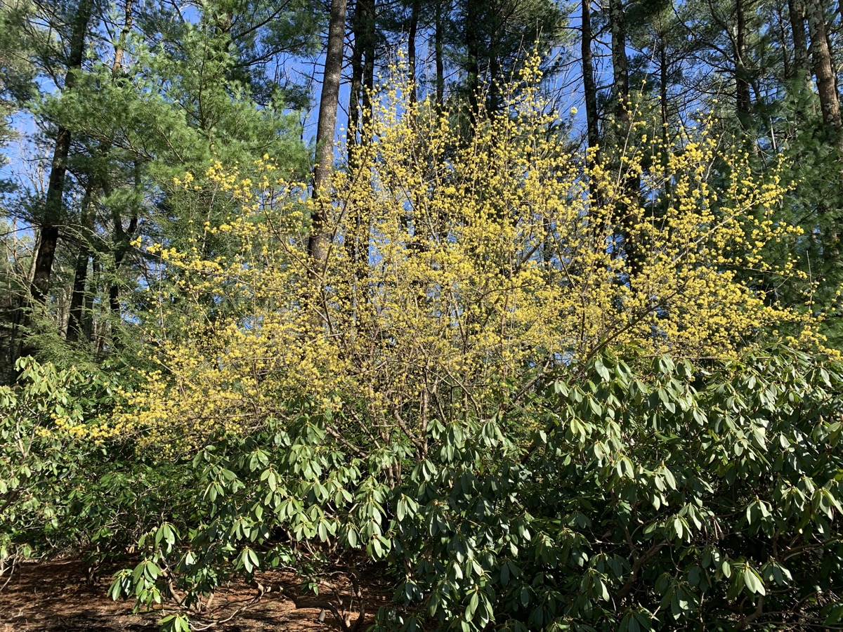 Plant diversity brings us to a state of joy and hope