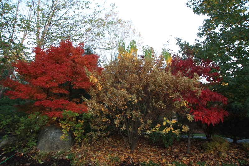 beautiful autumn foliage