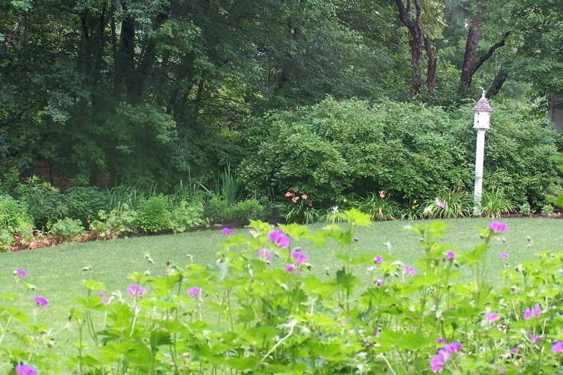 colorful residential wetland replication planting