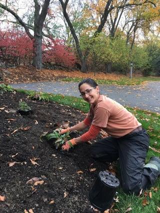 fall perennial planting an echinacea