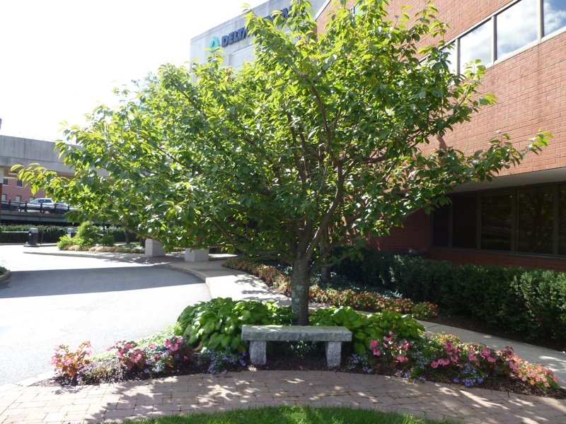 get smart with a commercial landscape