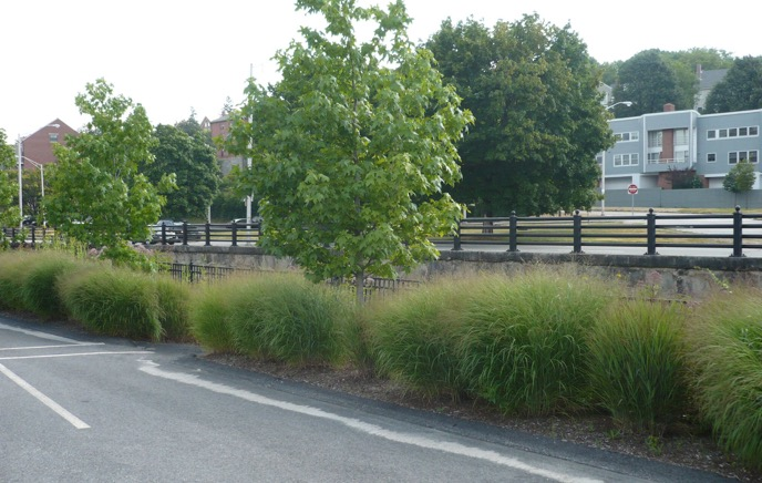 ornimental grasses in summer landscapes