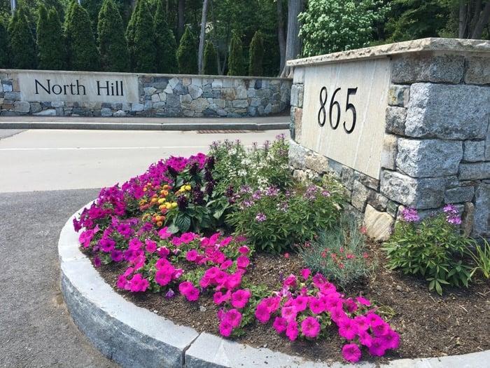 summer-flowers-at-north-hill.jpg