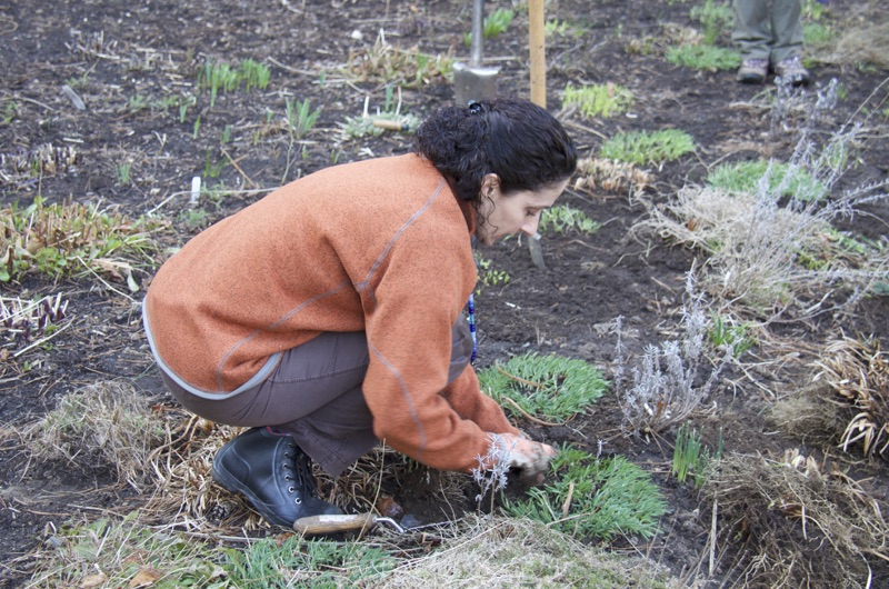 tips-for-busy-homeowners-how-to-have-well-tended-landscape.jpg