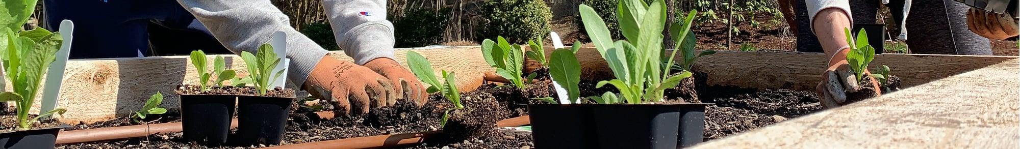 Home-Garden-Header
