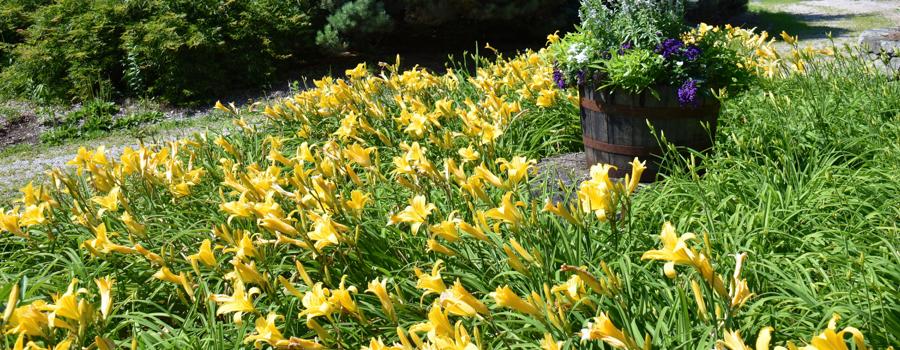 elements of an effective fine gardening program