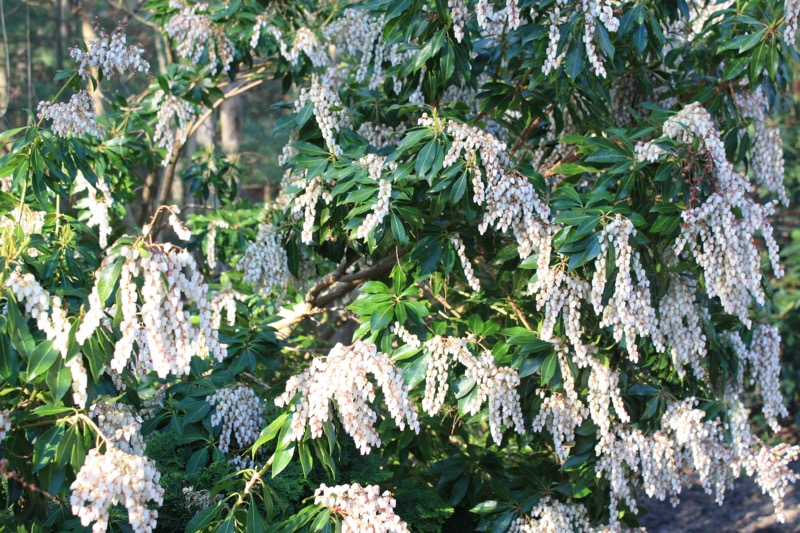 Time to Add Different Shrubs to Your Landscape