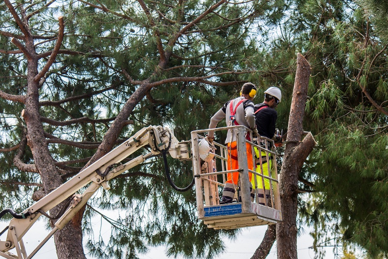 The 411 on Tree Conservation By-Laws