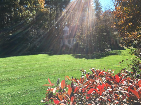5 Top Fall Tasks To Give Your Landscape The Biggest Bang For Your Buck