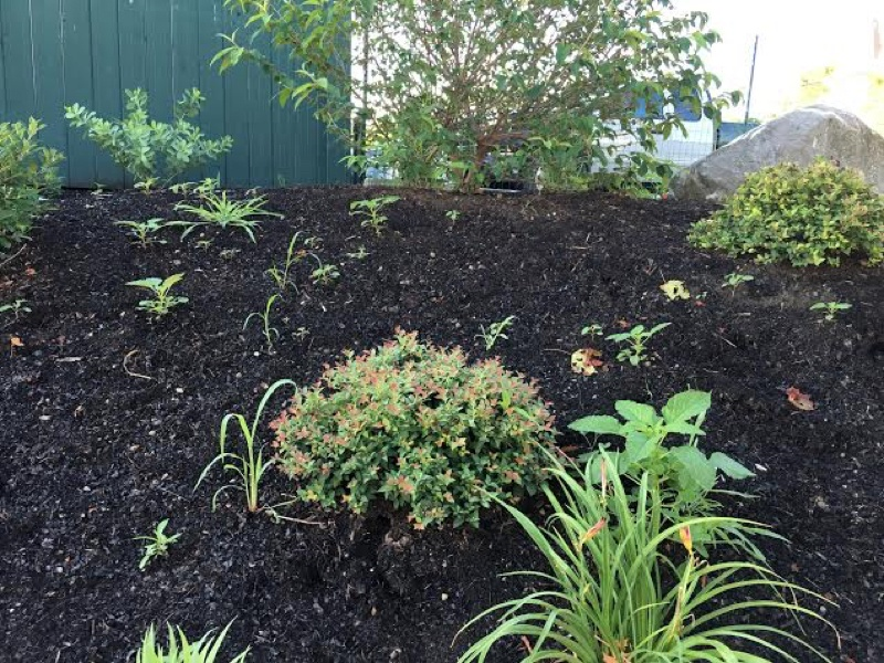 How to Weed Your Garden Like a Pro: Part I