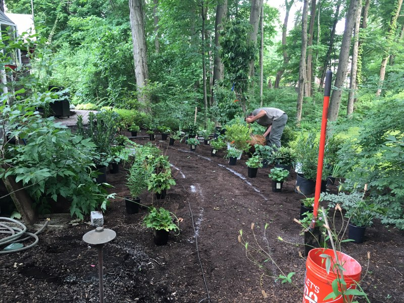 Spring into Summer Action: Completing Your Garden Plant Assessments