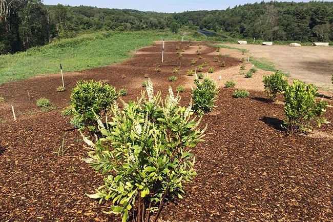 19-Planting