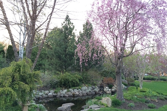 2-_Garden-Dreamscape