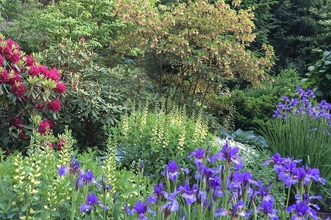 5-_Garden-Dreamscape