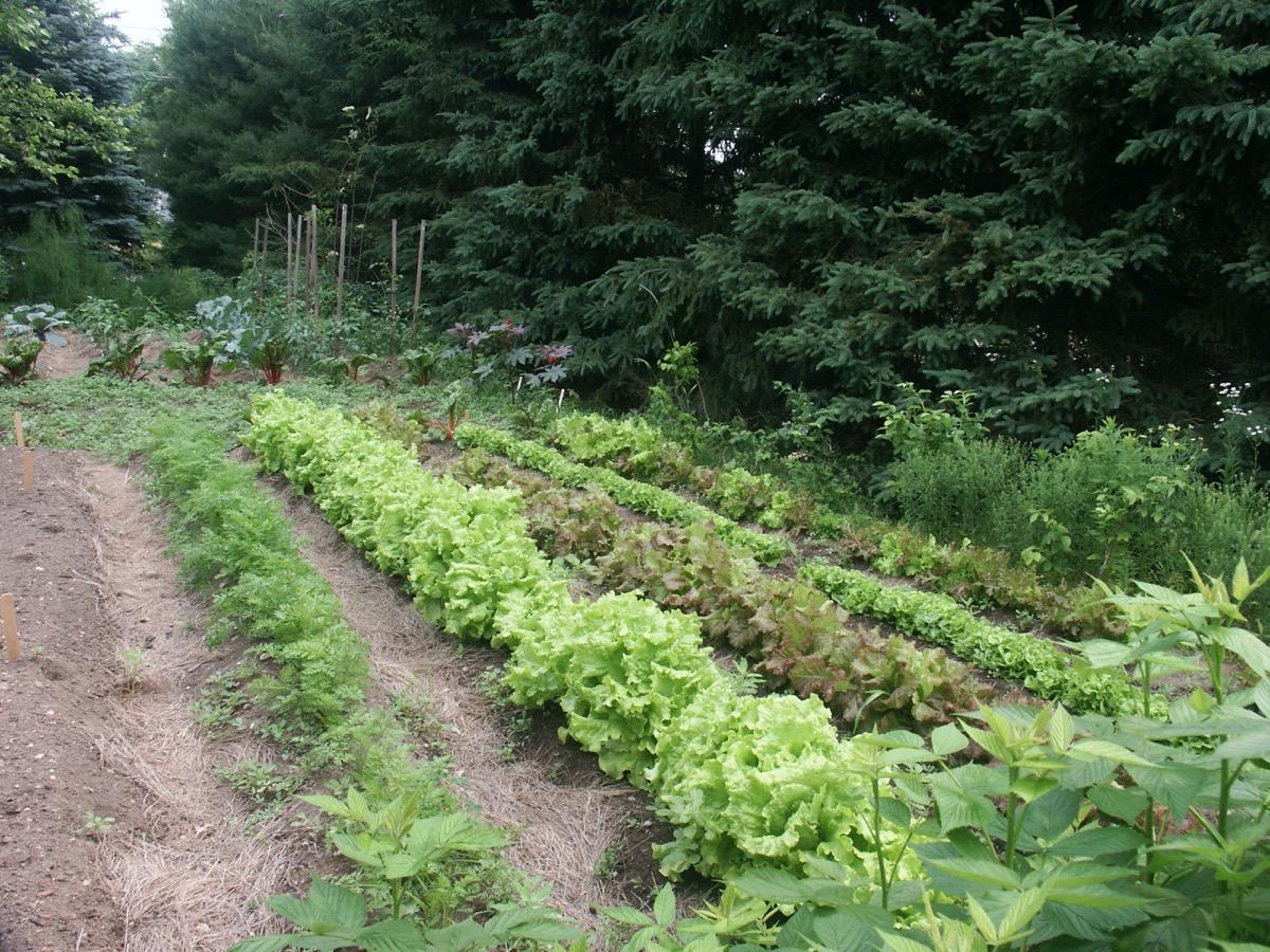 V3-Late-June-Garden