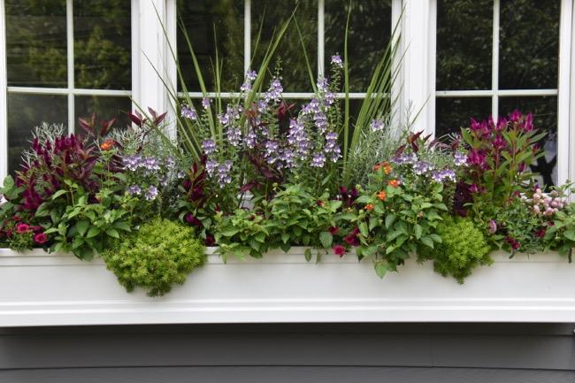 6-Summer-window-box.jpg
